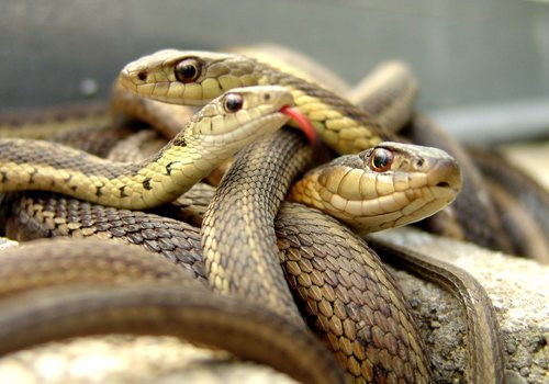 شركة مكافحة الثعابين عجمان