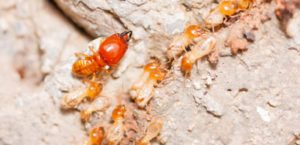termite inspection treatment alibdaa