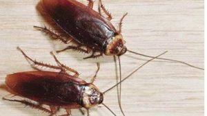 ارخص شركة مكافحة حشرات ابو ظبى - شركات مكافحة صراصير فى ابو ظبى