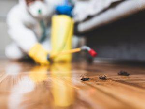 ارخص شركة مكافحة حشرات بالعين