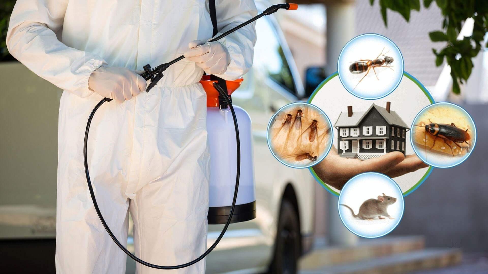 شركة مكافحة حشرات بالعين   0555514982